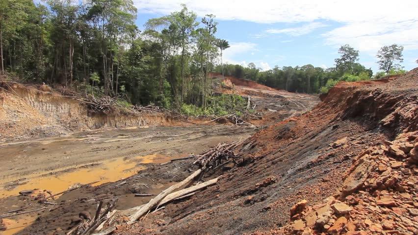 Deforestation environmental damage Borneo Malaysia