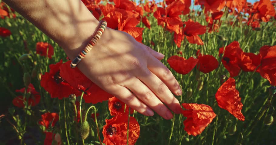 Close-up of woman's hand running through poppies field, crane shot. Slow motion 120 fps. Filmed in 4K DCi resolution. Girl's hand touching red poppy flowers closeup. Love nature concept. | Shutterstock HD Video #10308023