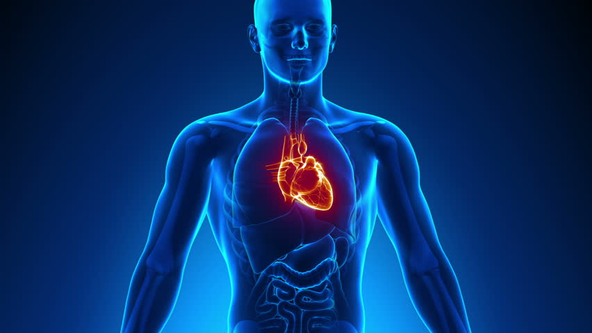 Anatomy Of Human Heart - Medical X-Ray Scan Stock Footage Video ...