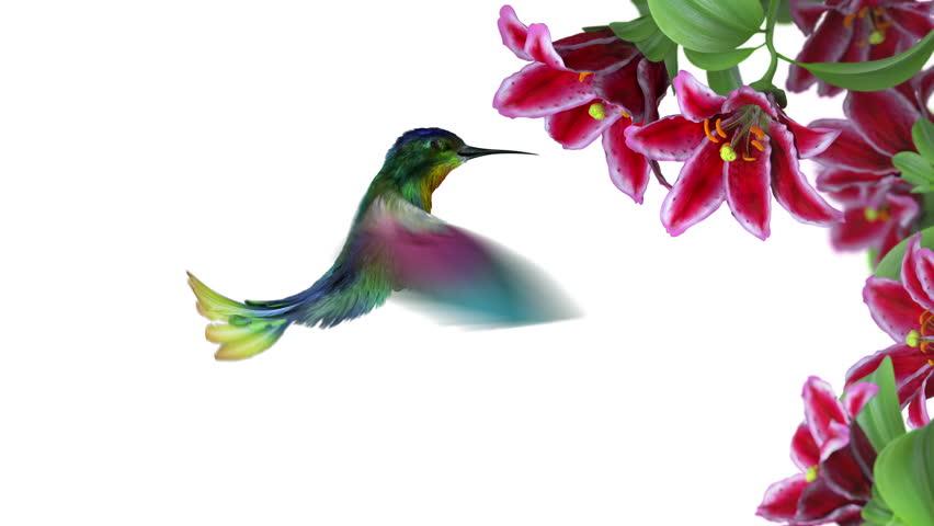 Humming bird, 3d animation - 4K stock video clip