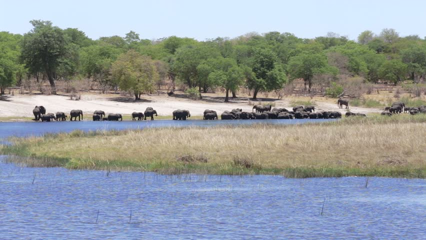Herd of African elephants drinking from river in small Nambwa game reserve, Namibia | Shutterstock HD Video #10546235