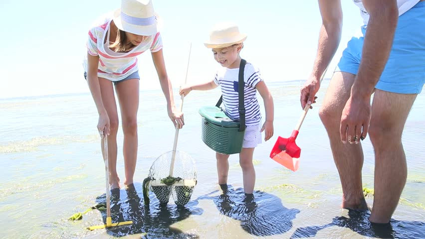 Family playing at low tide trying to find seashells   Shutterstock HD Video #10625255