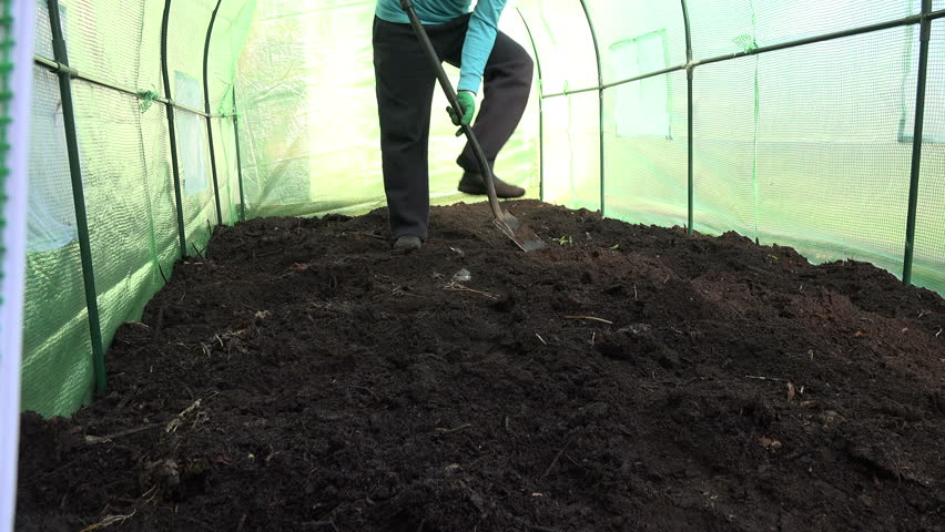 Happy farmer man dig ground in hothouse and check fertility of compost fertilized soil. Man show thumbs up. Good soil condition. Static closeup shot. 4K UHD video clip.