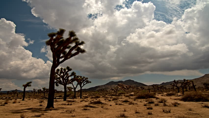 Time lapse clouds travel over the Joshua Tree National Park, California. - 4K stock footage clip