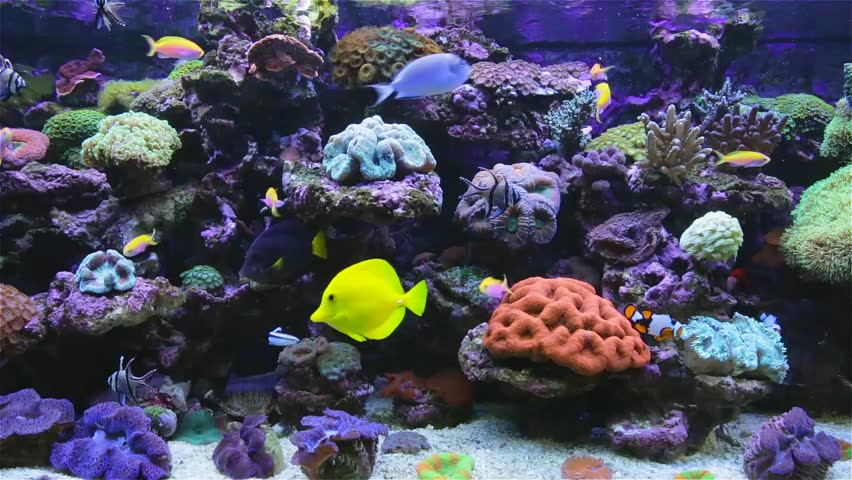 exotic fishes corals hd - photo #4