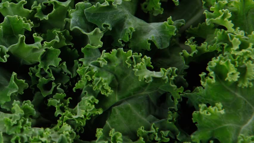fresh raw green kale packed in plastic box ready to sell 1920x1080 intro motion slow hidef hd