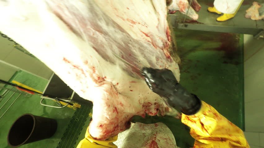 Butcher skinning a cattle carcass by the use of a curved knife, slaughterhouse interior, first person view, legally obtained footage