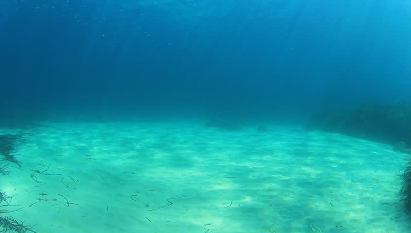 Underwater Sea Ocean Video clip - HD stock footage clip