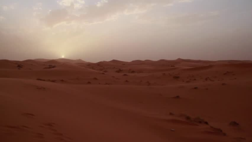 Beetle in the Desert | Shutterstock HD Video #11052692