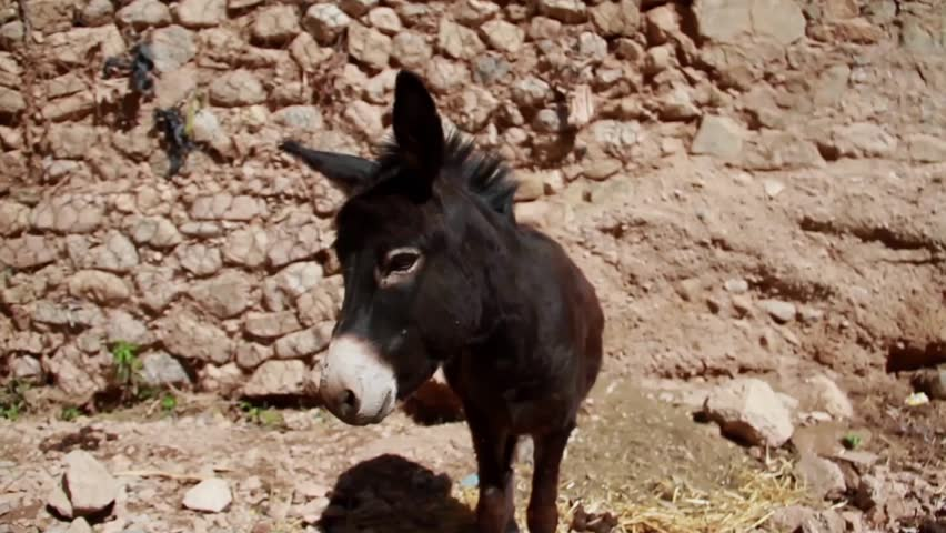 What does the poker term donkey mean