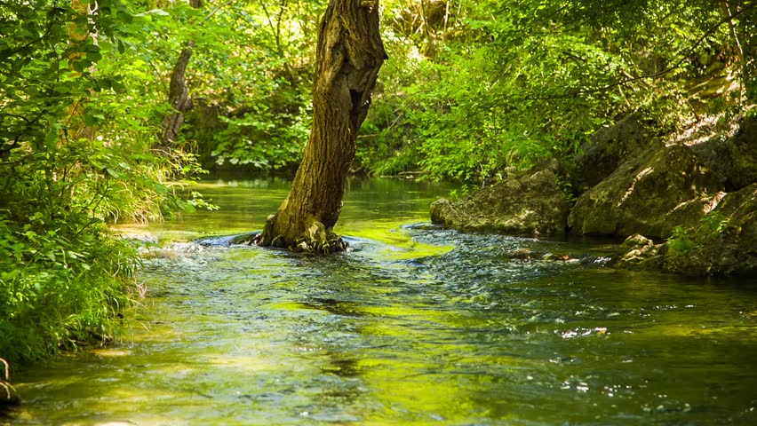 Locked down shot of a beautiful scenery - calm mountain river peacefully flowing in green forest, there is one tree growing in the flow.