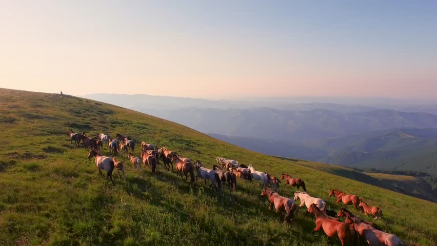 Aerial Shot Fly Over Animals Horses Running On Green Meadow Summer Field Hill Mountain  Wildlife Nature Beauty Landscape  | Shutterstock HD Video #11129174