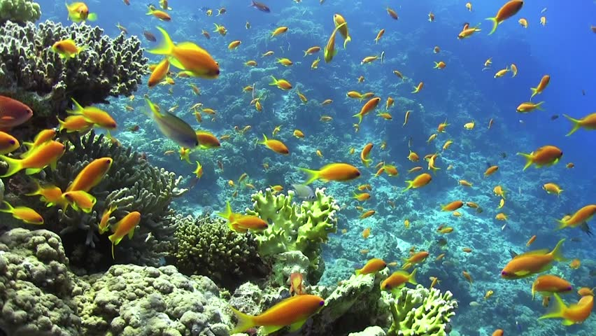 Vibrant Caribbean: Shoal Of Tropical Fish In A Colorful Coral Reef With Water