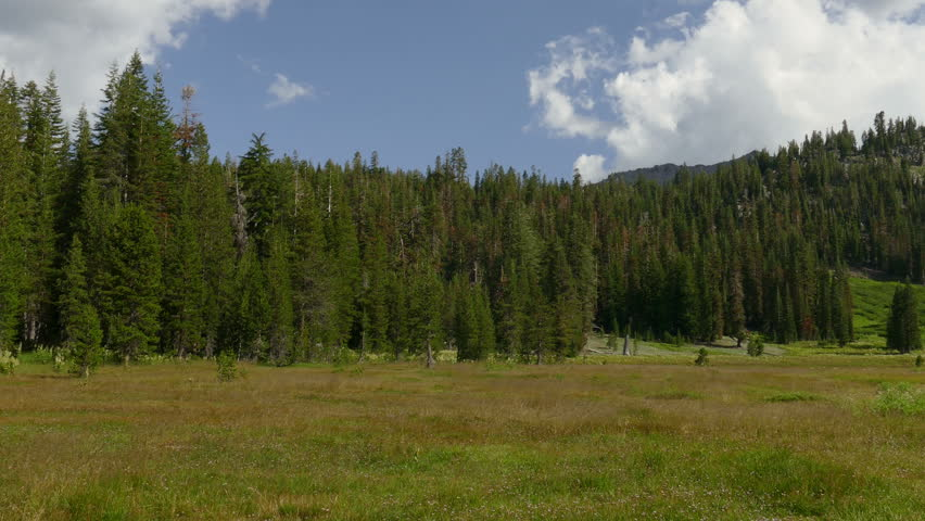 A meadow surrounded by forest in Lassen Volcanic National Park in California, USA.