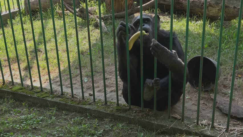 Adult monkey bars