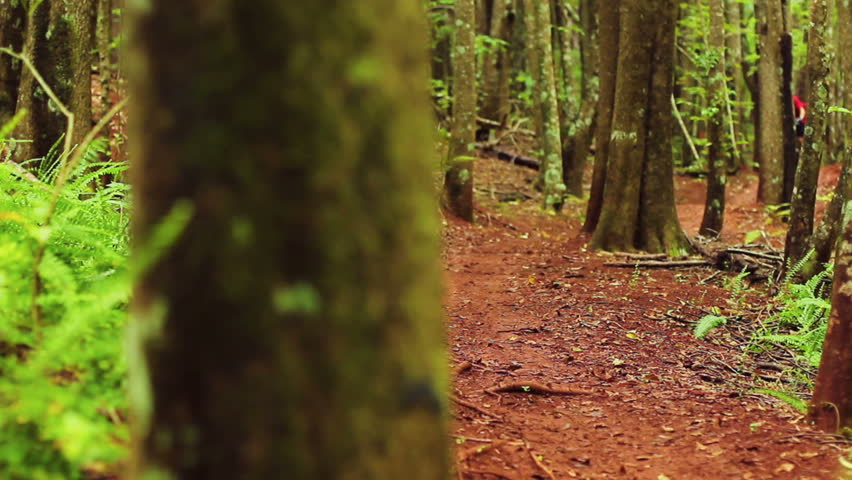 Mountain Biking Forest Trail. Outdoor Sports Healthy Lifestyle. Young Fit Man in Red Shirt Rushes Down Mountain Bike Trail Through a Lush Forest. Slow Pan Shot with Steadicam. Summer Extreme Sports. - HD stock video clip