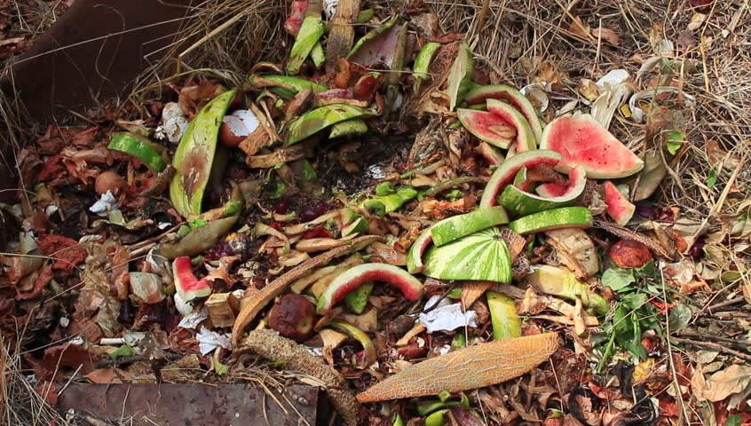 Organics for Composting. Person Throws Food Scraps Onto A Compost Pile - HD stock video clip