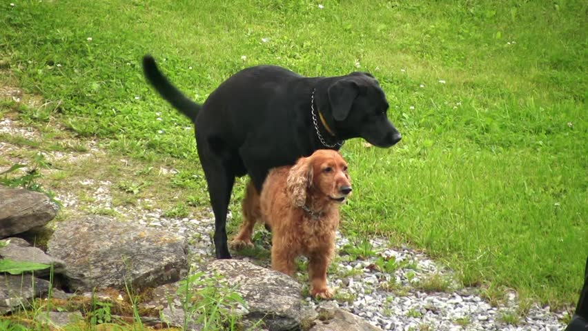 Hunde Sex Stock videoer - Shutterstock