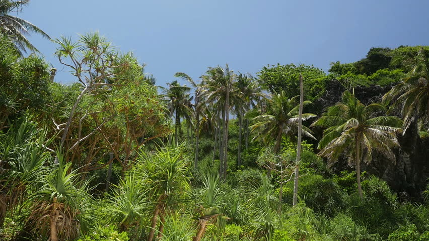 Panning video of nature with tropical rainforest at Thai island - HD stock footage clip