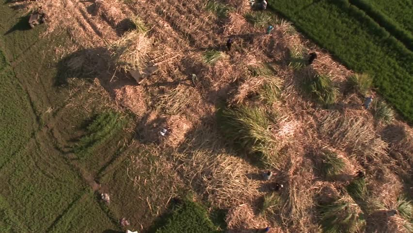 Balloon over farm lands, Nile valley, Egypt, aerial view as farmers harvest. - HD stock footage clip