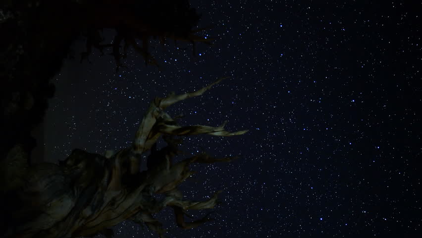 Astrophotography Time-lapse footage with pan motion of star trails over the oldest tree on Earth at dusk in Ancient Bristlecone Pine Forest in White Mountain, California -Vertical Shot-
