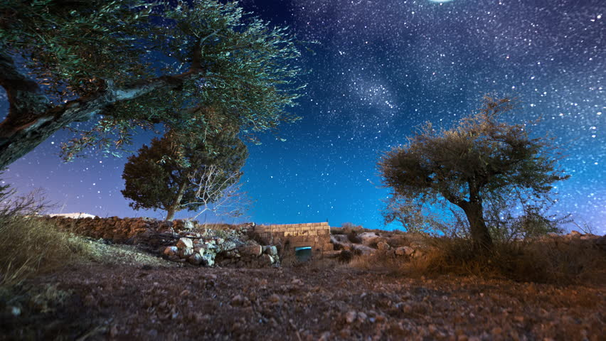 Israel - March, 2011: Astro time-lapse with olive trees in Bethlehem, Israel.