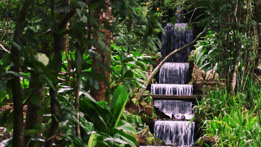 Rio de Janeiro, Brazil - June 2013: Slow panning shot of leaves and a waterfall in botanical garden. Filmed during the day in Rio, Brazil on June 22, 2013.