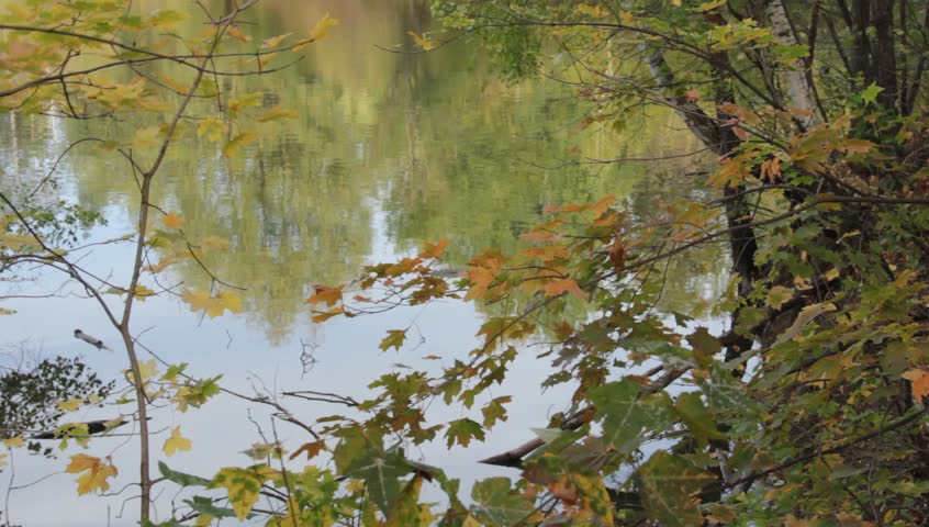 Calm autumn landscape with trees on the river - HD stock video clip