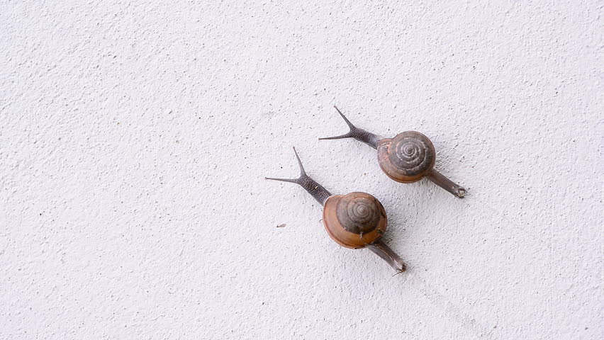 Couple snail | Shutterstock HD Video #12047138