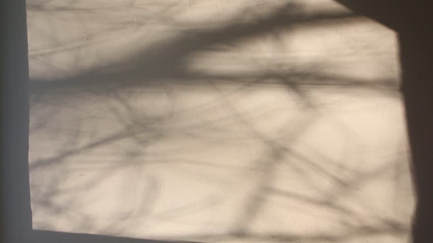 mystic moving trees shadows on white wall