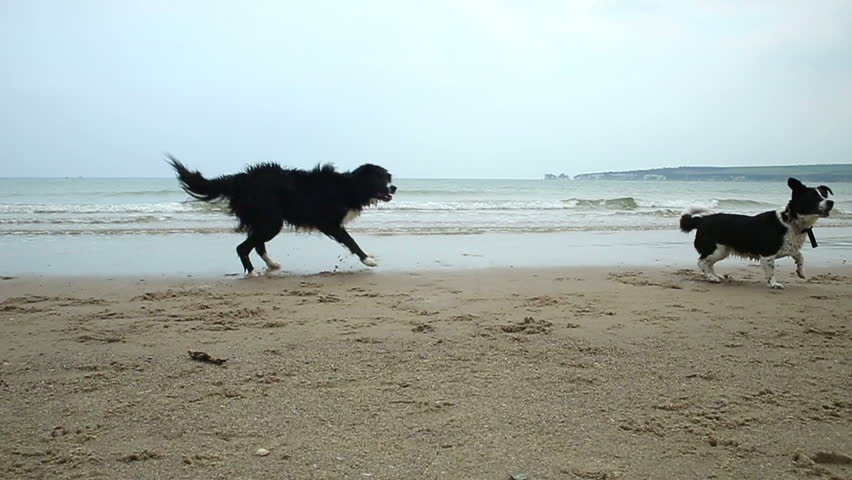 Two dogs chasing a ball into the sea on a beautiful stretch of coastline - HD stock video clip