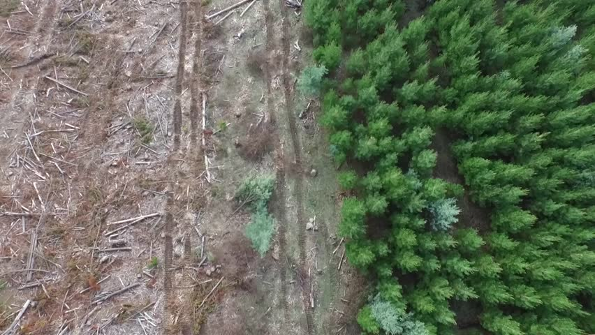 deforestation in australia Australia 213% —or about 163,678,000 hectares—of australia is forested of  this, 32% —or roughly 5,233,000 hectares—is classified as primary forest, the.