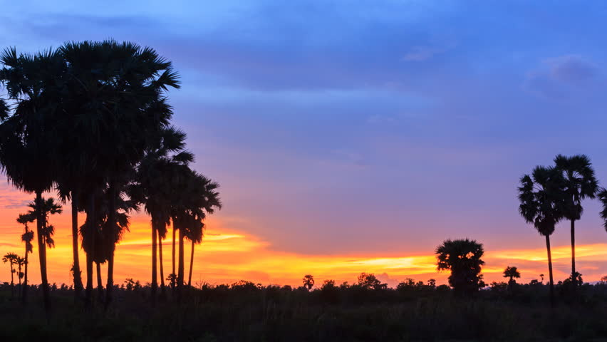 4K Timelapse, silhouette of sugar palm in twilight sky, Thailand. - 4K stock footage clip