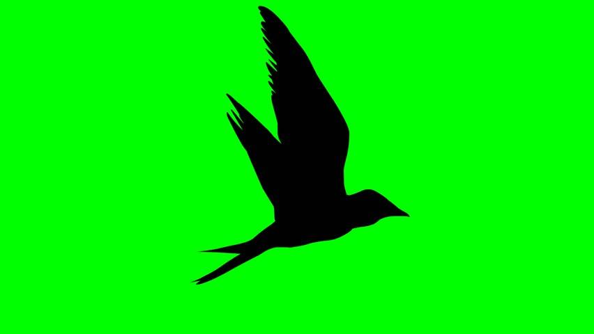 Bird fly side loop 10 sec / Birds Silhouette 02