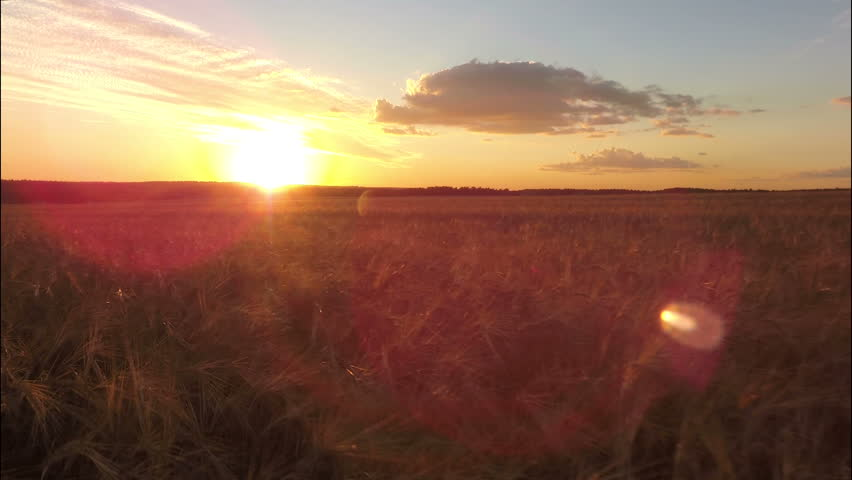 AERIAL: Flight over the wheat field in sunset with lens flare | Shutterstock HD Video #12545405