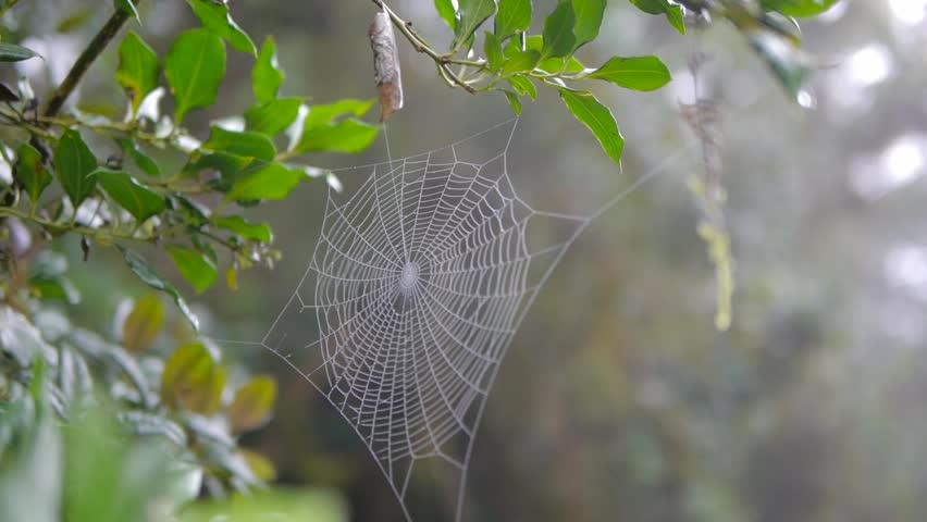 Spider web morning sunlight