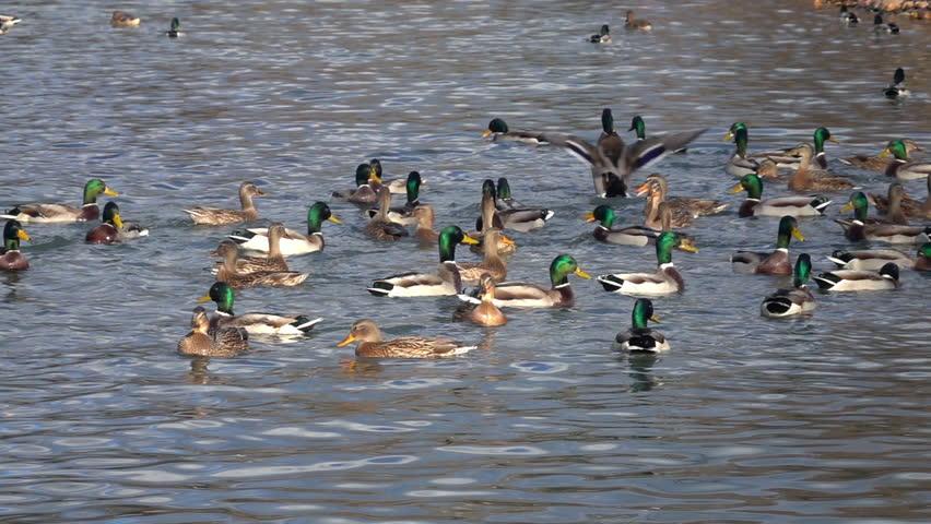 1920x1080 cabin lake ducks - photo #10