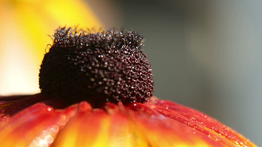 macro shoot of flower with little bee