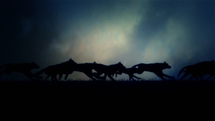 A Large Pack of Wolves Running on a Dark Stormy Night | Shutterstock HD Video #12695696