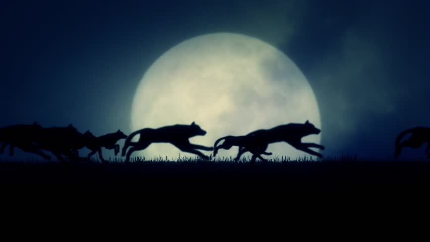 A Pack of Wolves Running on a Rising Full Moon Background