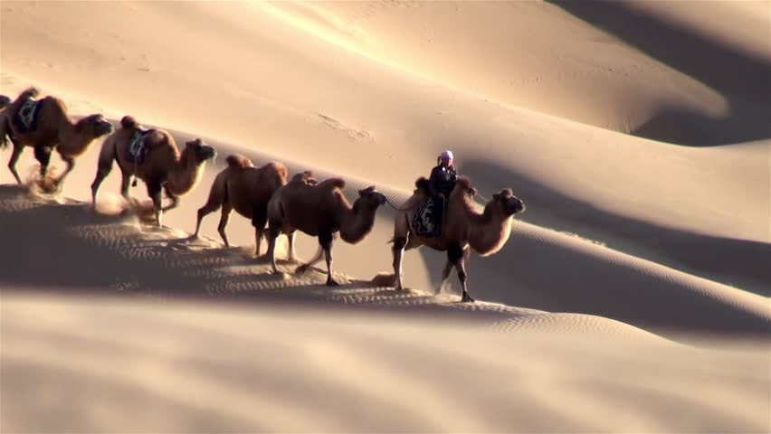 Camel crew walking down a sand dune in the desert