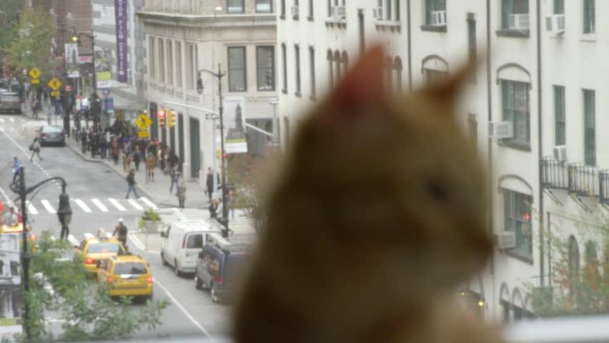Cute orange cat in front of window with city scene in background in Manhattan NYC in 4K - 4K stock video clip