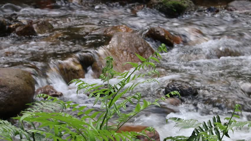 Natural stream in tropical forest  - HD stock video clip