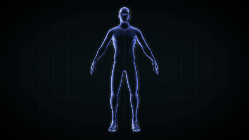 Wireframe Scan Over Female Anatomy Transparent Human Body 3d