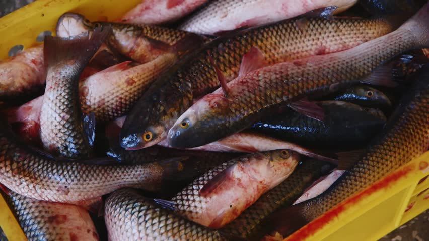 Silver carp definition meaning for What does carp mean