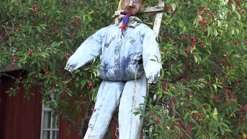 scarecrow on wooden ladder stand near cherry tree in garden. Object used to protect berry from birds. Tilt up shot. 4K - 4K stock video clip