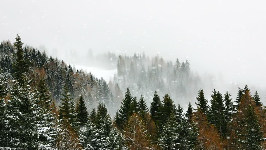 Snowy winter on the forest | Shutterstock HD Video #13594643