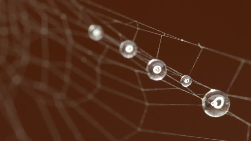 Spider Web extreme close up HD Stock Footage. A full macro Close up shot of a Spiders Web with water droplets attached to it from the mist.
