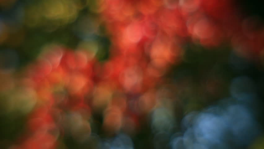 Incredible vertical panorama of defocused tree with autumn color foliage. Wonderful abstract floral background in fairy tale style for dreamlike mood. Adorable view of magic forest in amazing full HD. - HD stock video clip