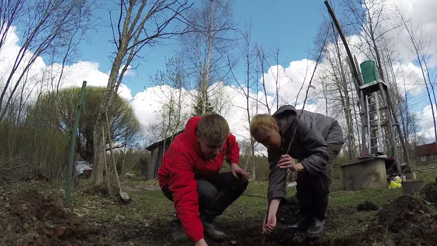 The young man and the woman plant a fruit tree sapling in the prepared hole in the damp soil in the spring